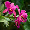 Orchid_5482