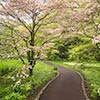Flowering Dogwood Path_8807