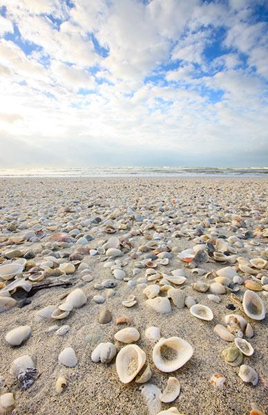 Shell Beach 8281 jpg